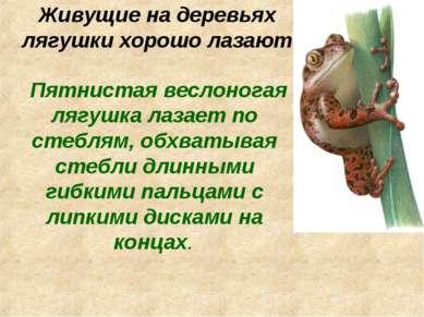 Живущие на деревьях лягушки хорошо лазают Пятнистая веслоногая лягушка лазает...