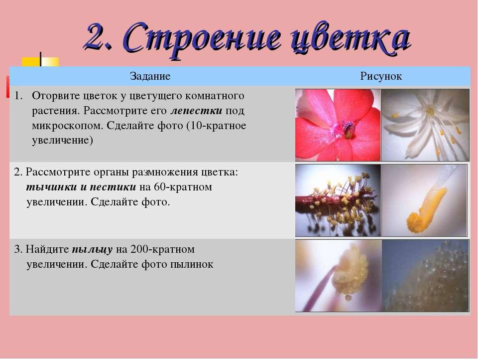 2. Строение цветка Задание Рисунок Оторвите цветок у цветущего комнатного рас...