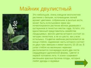 Майник двулистный Это небольшое, очень изящное многолетнее растение с белыми,...