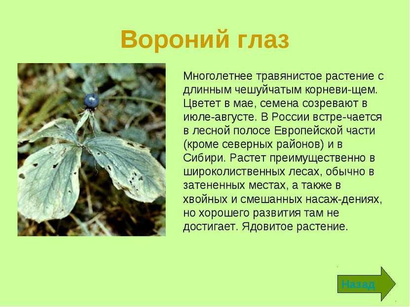Вороний глаз Назад Многолетнее травянистое растение с длинным чешуйчатым корн...