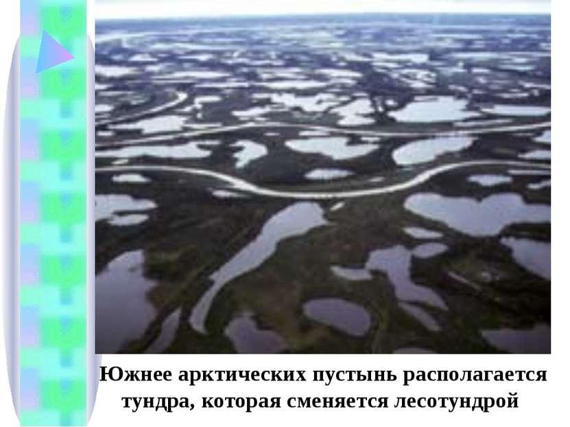 Южнее арктических пустынь располагается тундра, которая сменяется лесотундрой