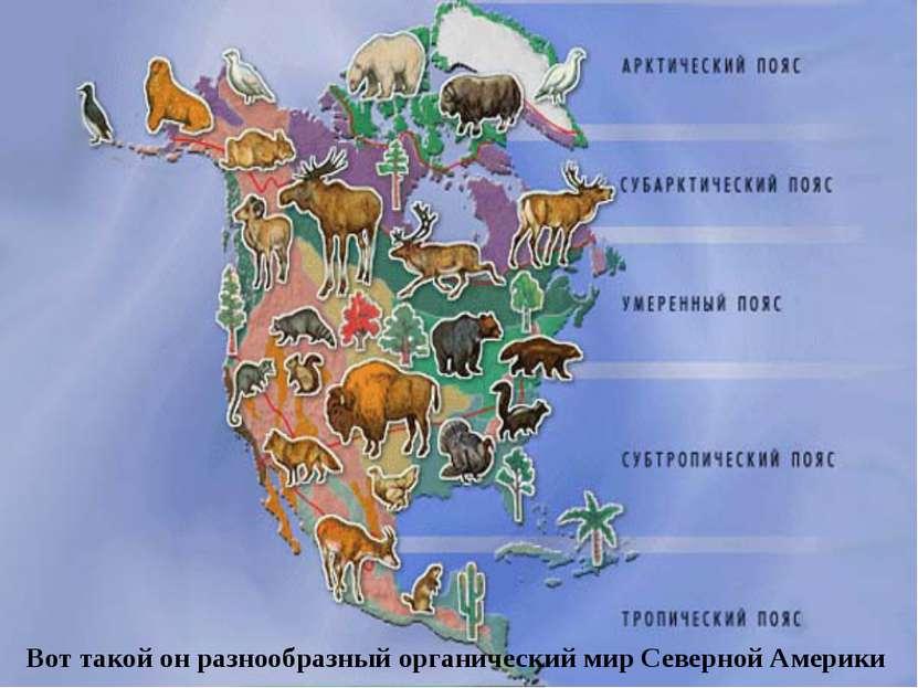 Вот такой он разнообразный органический мир Северной Америки