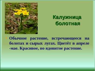 Калужница болотная Обычное растение, встречающееся на болотах и сырых лугах. ...