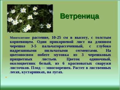Ветреница Многолетнее растение, 10-25 см в высоту, с толстым корневищем. Один...