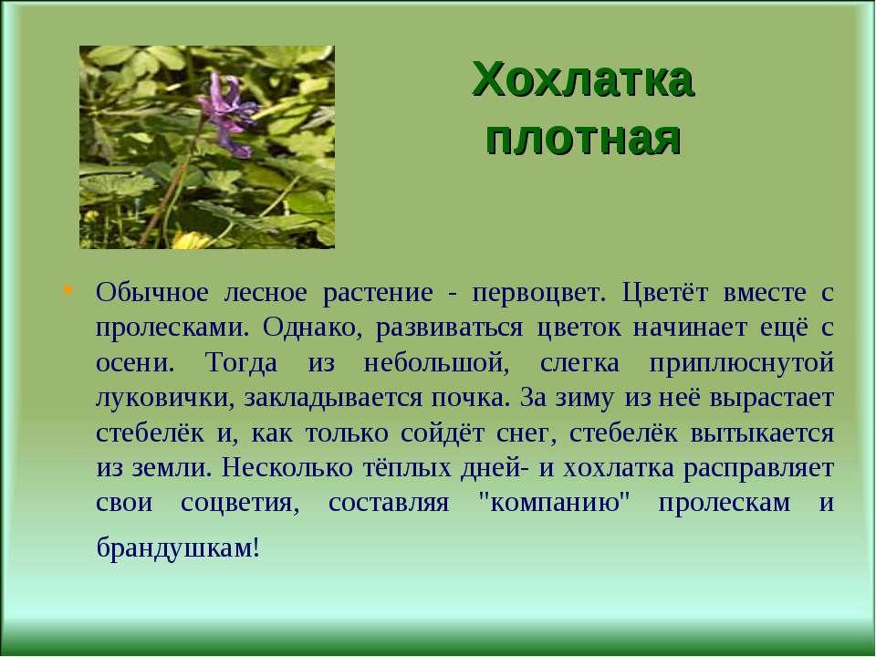 Хохлатка плотная Обычное лесное растение - первоцвет. Цветёт вместе с пролеск...