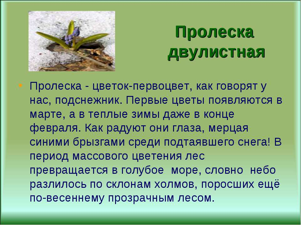Цветок перелеска и описание