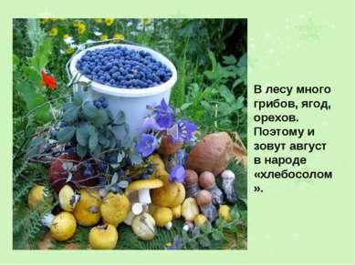 В лесу много грибов, ягод, орехов. Поэтому и зовут август в народе «хлебосолом».