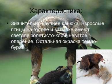 Характеристика: Значительно крупнее канюка. Взрослые птицы на голове и затылк...