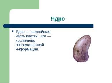 Ядро Ядро — важнейшая часть клетки. Это — хранилище наследственной информации.