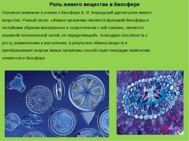 Роль живого вещества в биосфере Основное внимание в учении о биосфере В. И. В...