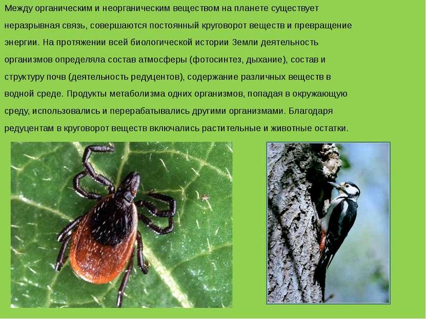 Между органическим и неорганическим веществом на планете существует неразрывн...