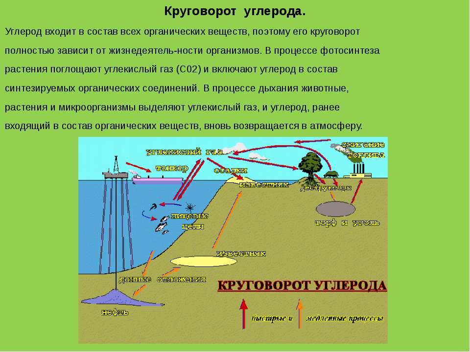 Круговорот углерода. Углерод входит в состав всех органических веществ, поэто...
