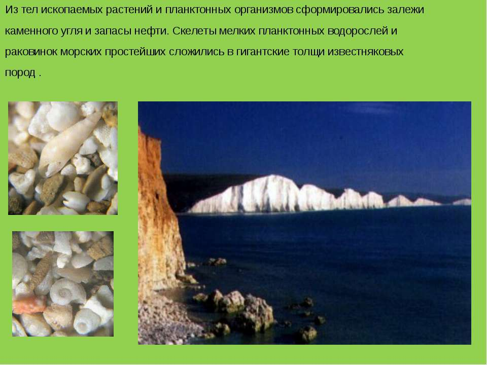 Из тел ископаемых растений и планктонных организмов сформировались залежи кам...