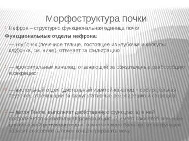 Морфоструктура почки Нефрон – структурно функциональная единица почки Функцио...