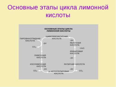 Основные этапы цикла лимонной кислоты
