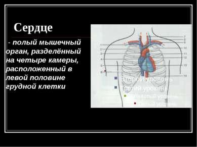 Сердце - полый мышечный орган, разделённый на четыре камеры, расположенный в ...
