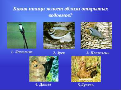 Какая птица живет вблизи открытых водоемов? 1. Ласточка 2. Зуек 3. Поползень ...