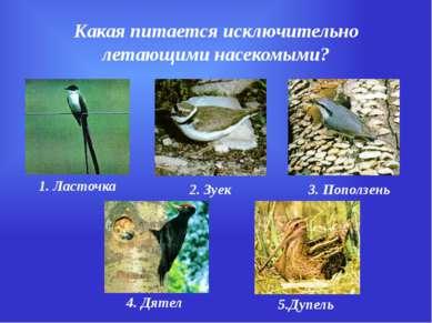 Какая питается исключительно летающими насекомыми? 1. Ласточка 2. Зуек 3. Поп...