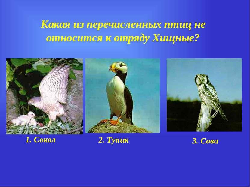 Какая из перечисленных птиц не относится к отряду Хищные? 1. Сокол 2. Тупик 3...