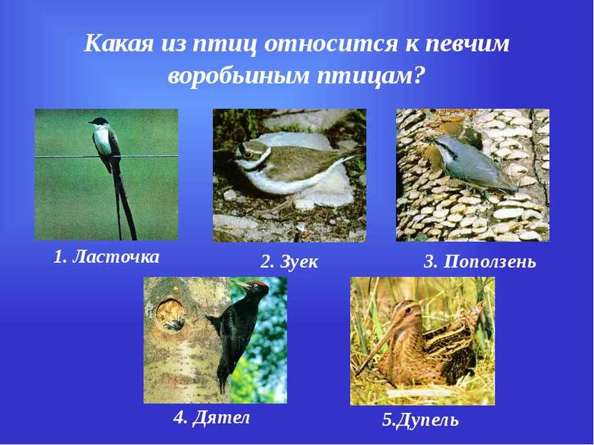 Какая из птиц относится к певчим воробьиным птицам? 1. Ласточка 2. Зуек 3. По...