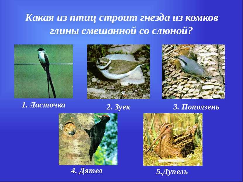 Какая из птиц строит гнезда из комков глины смешанной со слюной? 1. Ласточка ...