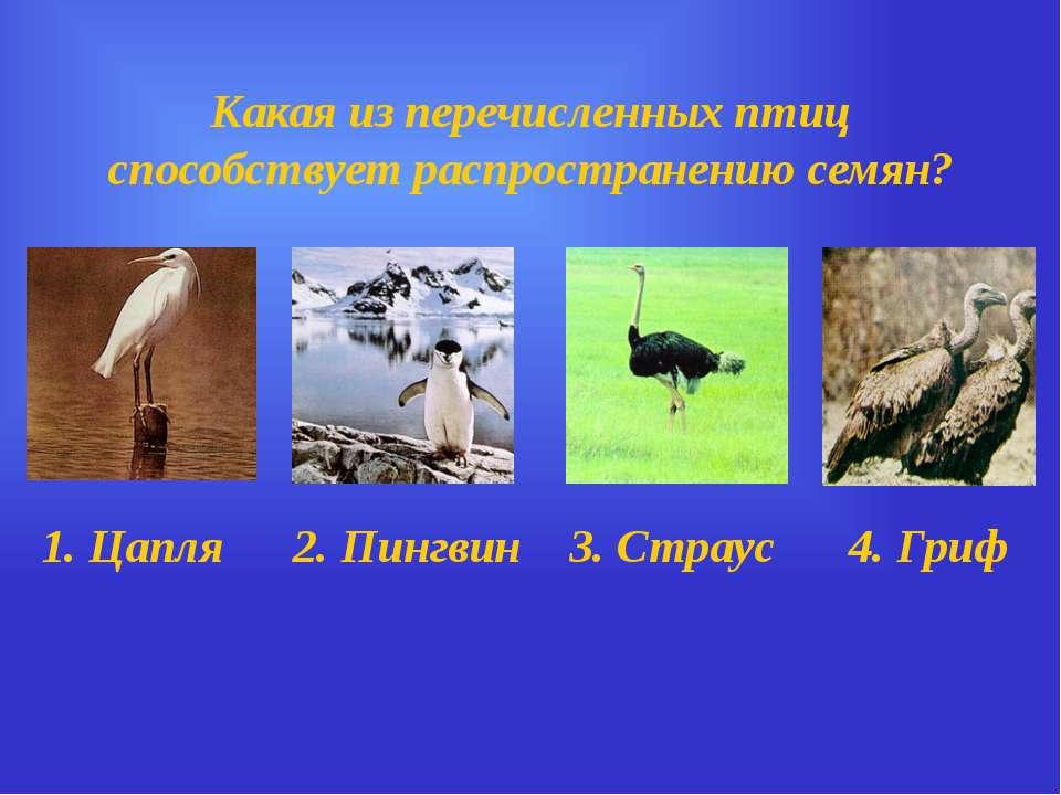 Какая из перечисленных птиц способствует распространению семян? 1. Цапля 2. П...