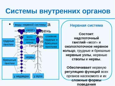 Системы внутренних органов виды нервной системы слияние грудных и брюшных ган...