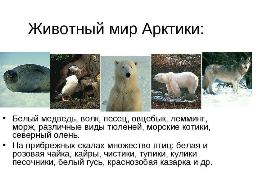 Животный мир Арктики: Белый медведь, волк, песец, овцебык, лемминг, морж, раз...