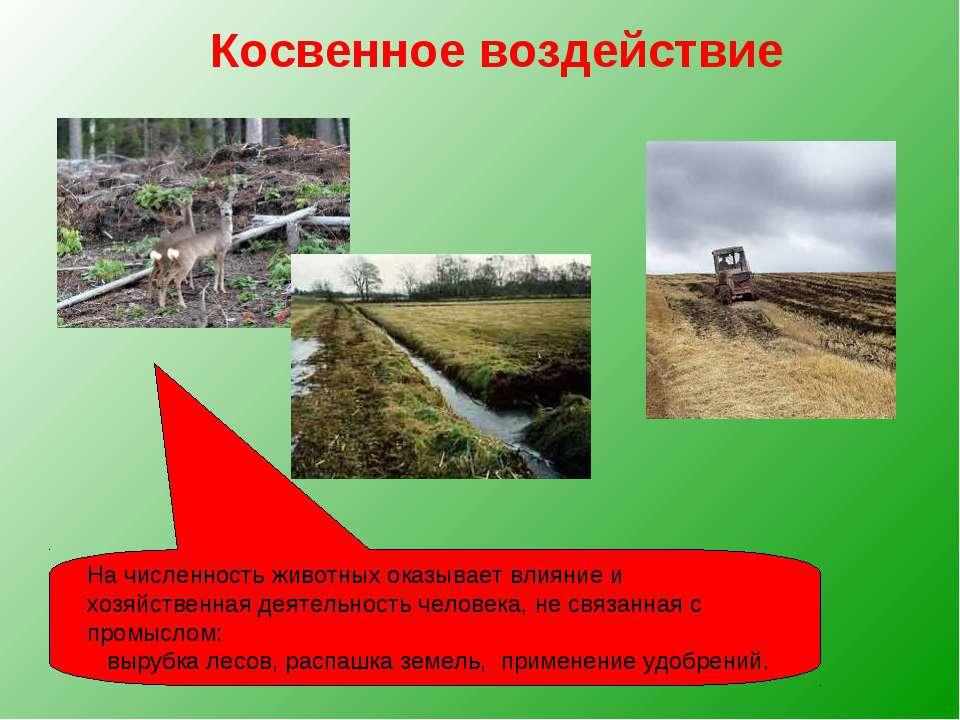 Косвенное воздействие На численность животных оказывает влияние и хозяйственн...