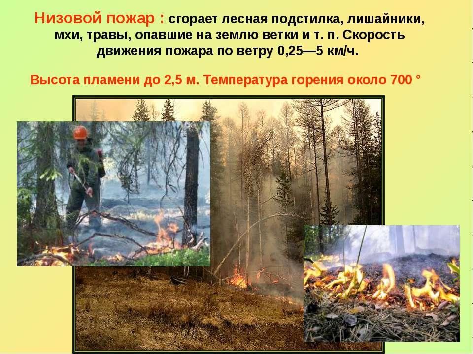 Низовой пожар : сгорает лесная подстилка, лишайники, мхи, травы, опавшие на з...