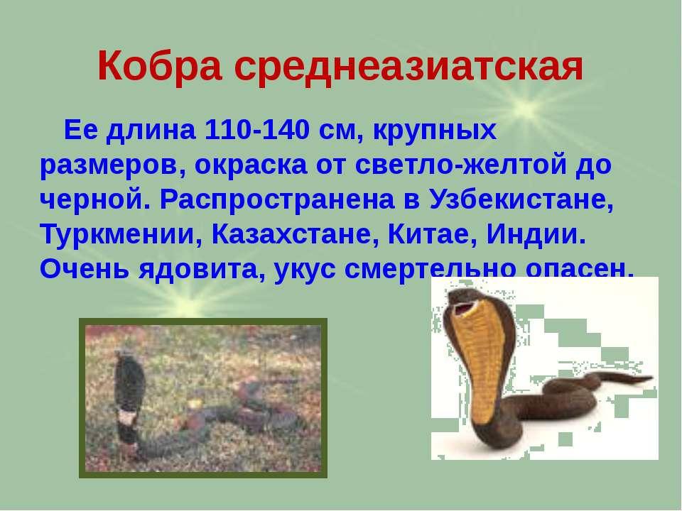 Кобра среднеазиатская Ее длина 110-140 см, крупных размеров, окраска от светл...