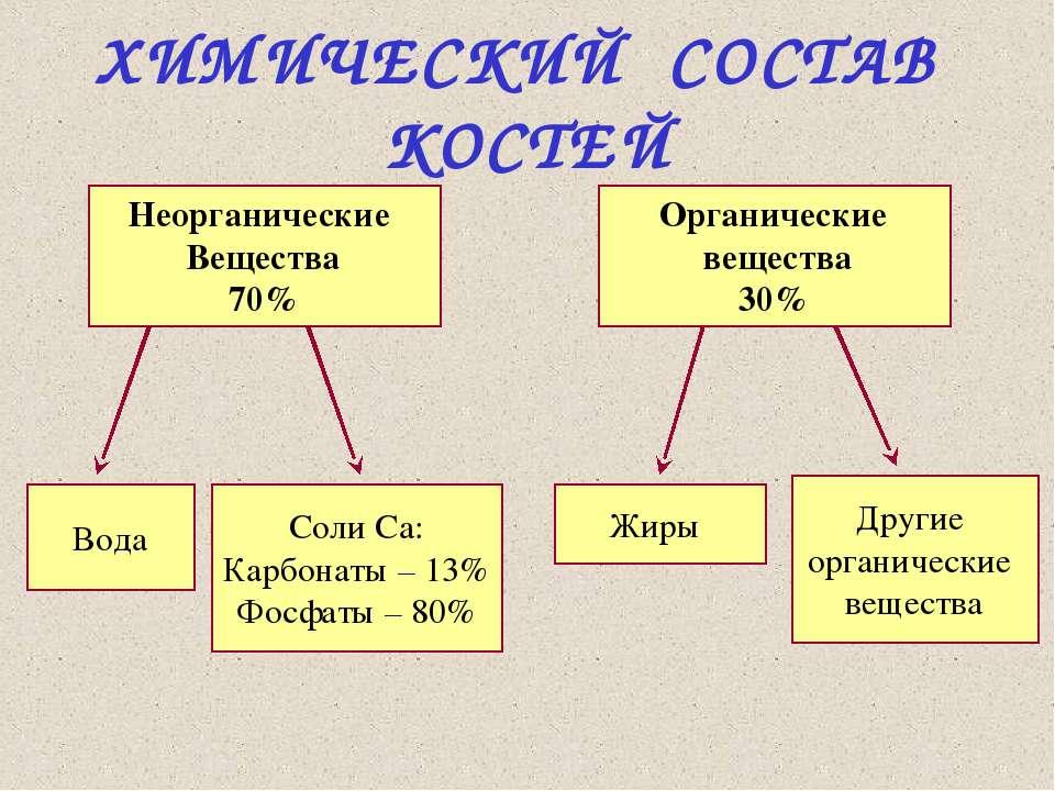 ХИМИЧЕСКИЙ СОСТАВ КОСТЕЙ Неорганические Вещества 70% Органические вещества 30...