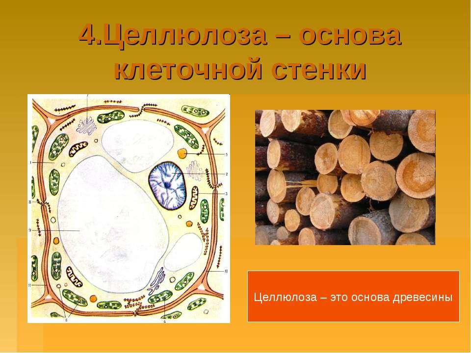 4.Целлюлоза – основа клеточной стенки Целлюлоза – это основа древесины