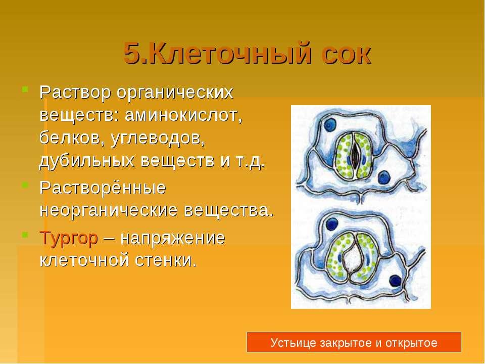 5.Клеточный сок Раствор органических веществ: аминокислот, белков, углеводов,...