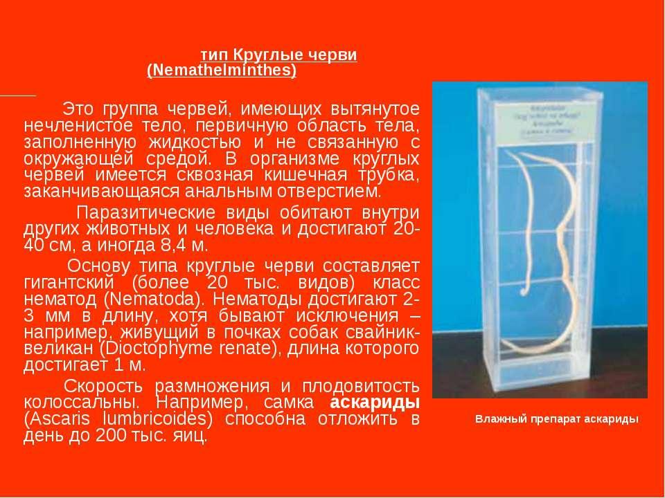 тип Круглые черви (Nemathelminthes) Это группа червей, имеющих вытянутое нечл...