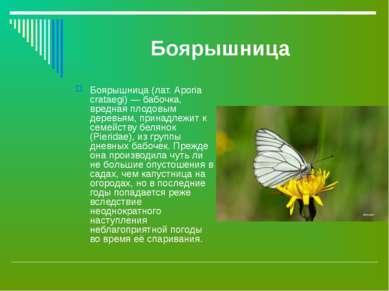 Боярышница Боярышница (лат. Aporia crataegi) — бабочка, вредная плодовым дере...