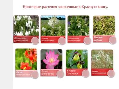 Некоторые растения занесенные в Красную книгу.
