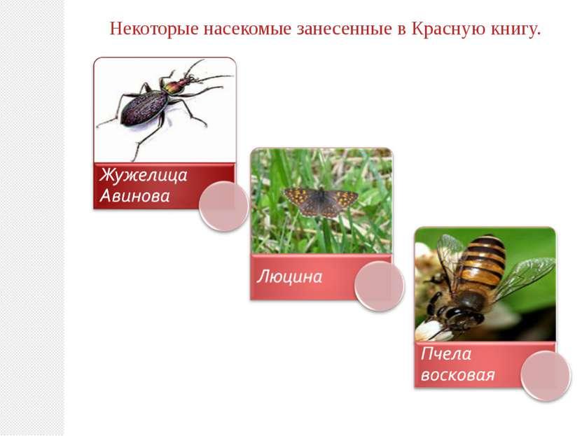 Некоторые насекомые занесенные в Красную книгу.
