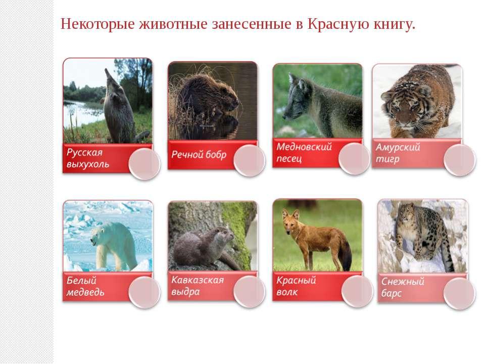 Некоторые животные занесенные в Красную книгу.
