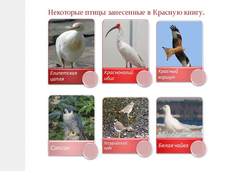 Некоторые птицы занесенные в Красную книгу.