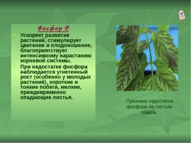 Фосфор Р Ускоряет развитие растений, стимулирует цветение и плодоношение, бла...