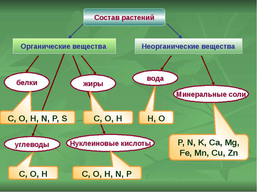 Состав растений Органические вещества Неорганические вещества белки жиры угле...
