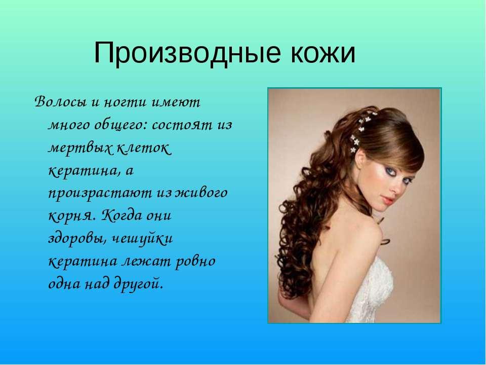 Производные кожи Волосы и ногти имеют много общего: состоят из мертвых клеток...