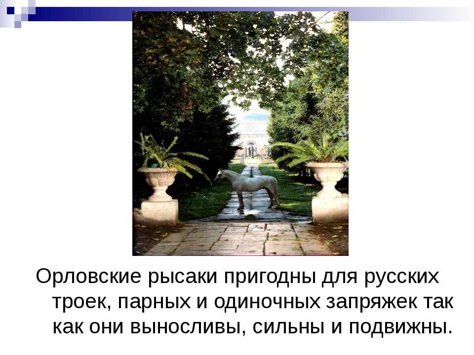Орловские рысаки пригодны для русских троек, парных и одиночных запряжек так ...