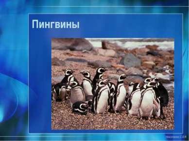 Пингвины Николаева С.Б.®