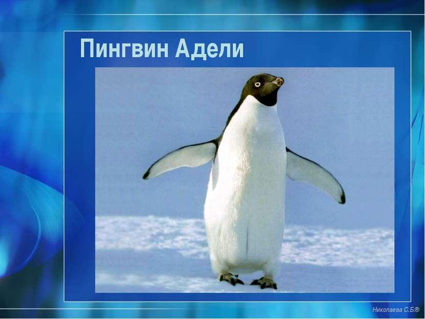 Пингвин Адели Николаева С.Б.®