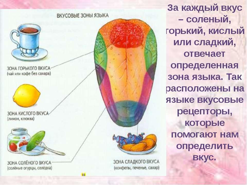 За каждый вкус – соленый, горький, кислый или сладкий, отвечает определенная ...