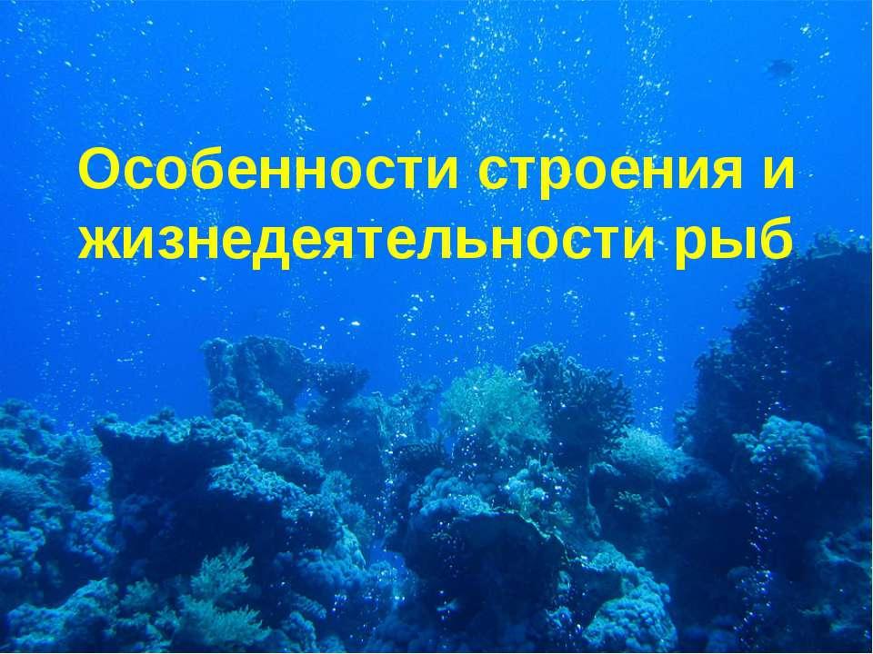 Особенности строения и жизнедеятельности рыб