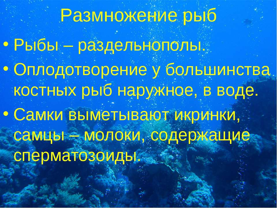 Размножение рыб Рыбы – раздельнополы. Оплодотворение у большинства костных ры...