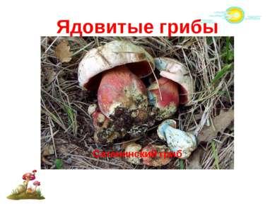 Ядовитые грибы Говорушка беловатая Боровик несъедобный Сатанинский гриб
